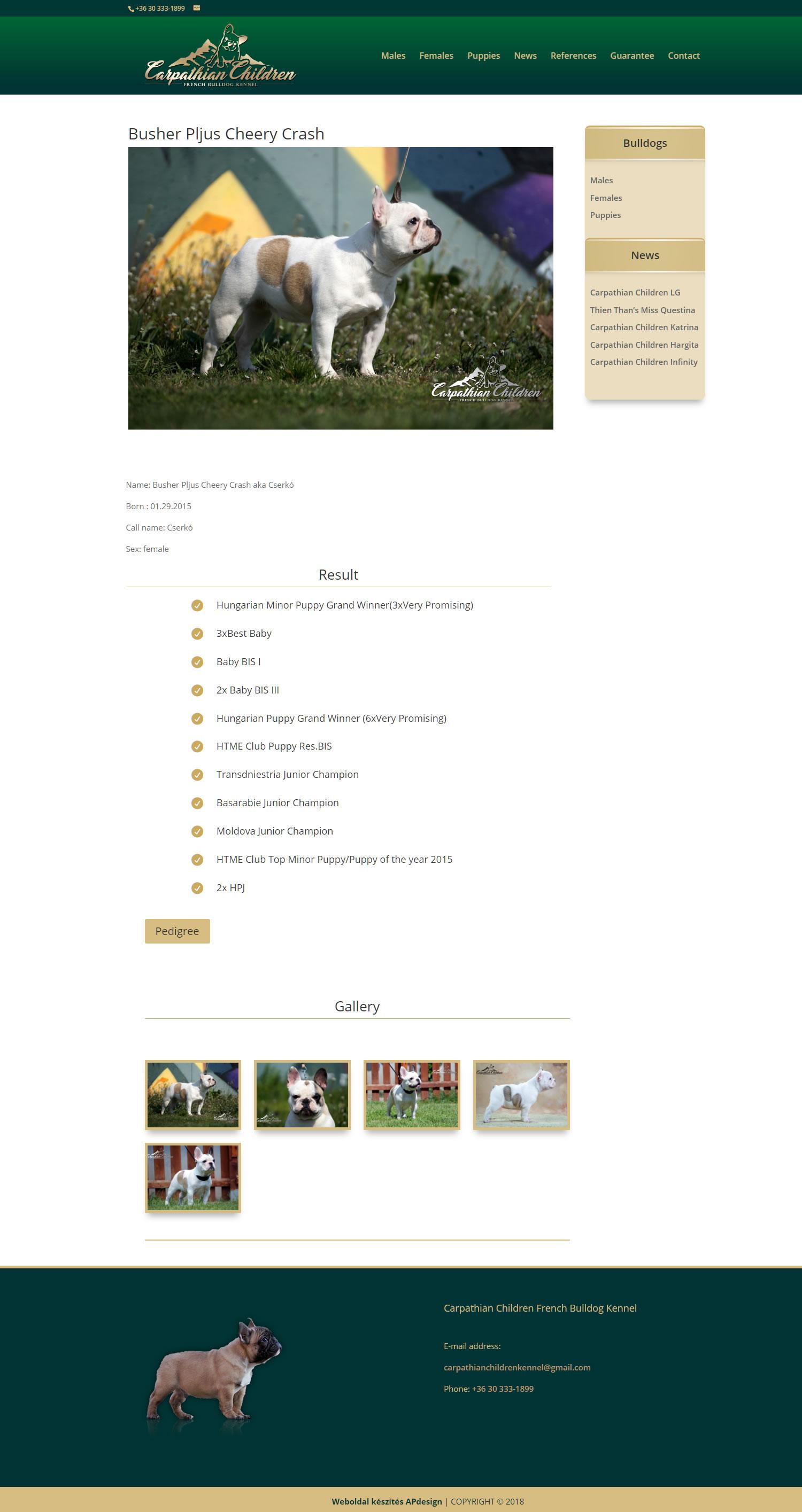 francia bulldog kutya adatlap